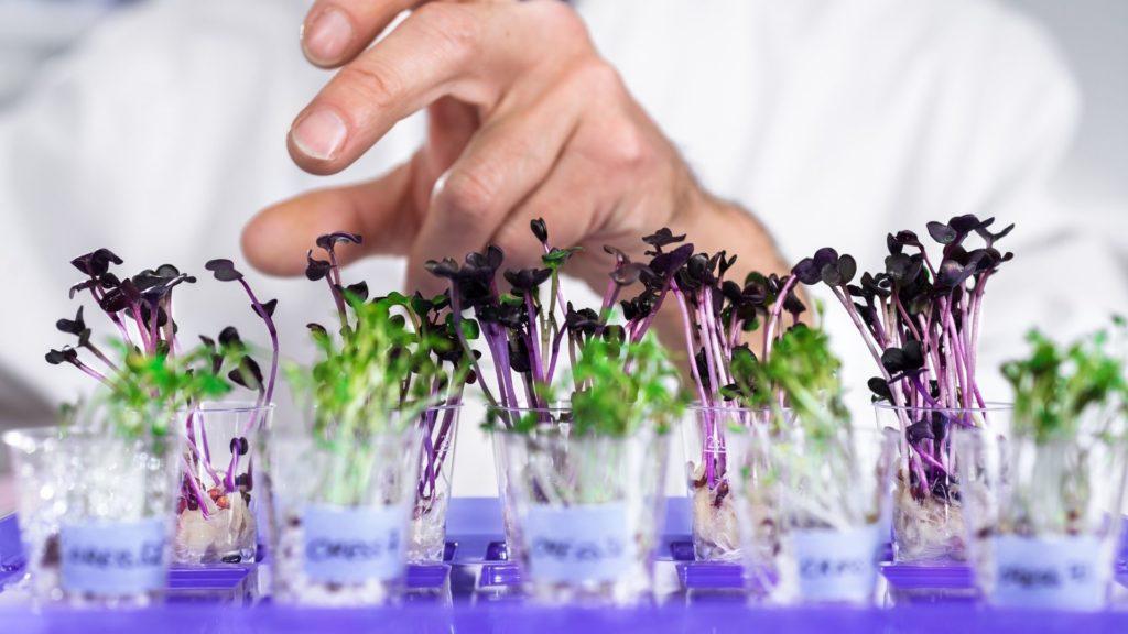 Hightech tuin- en landbouw